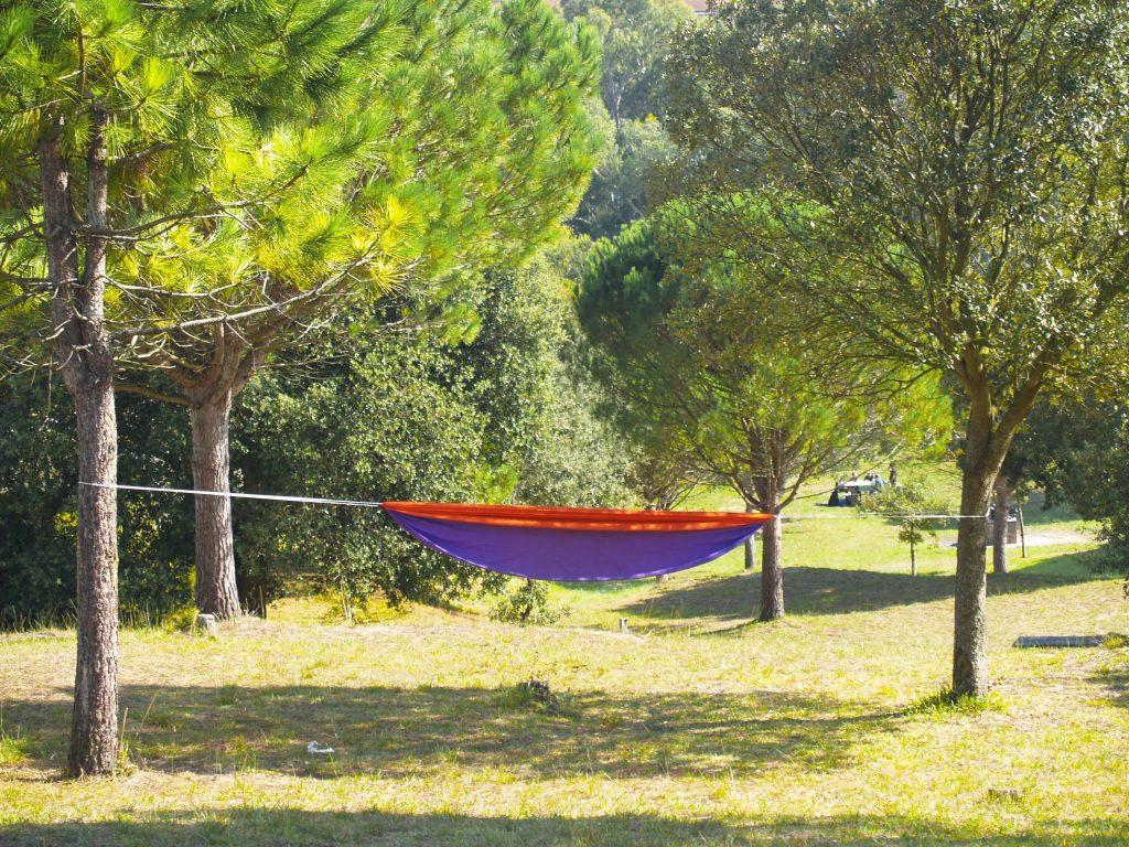 Árboles y descanso